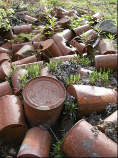 Rusted cans on the Jumbo Mine Trail
